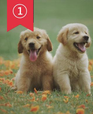 I migliori siti Anime e Anime