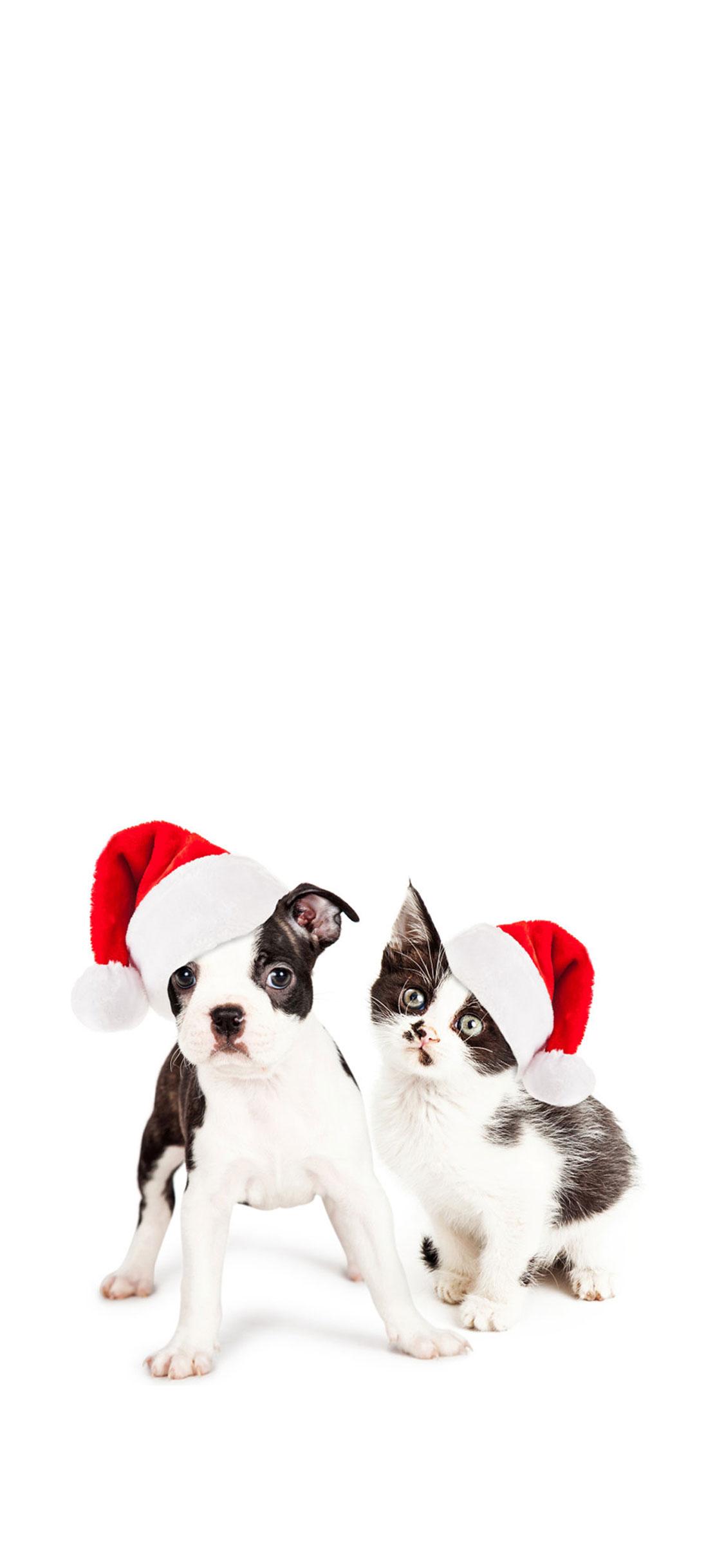 Gatto cane bianco