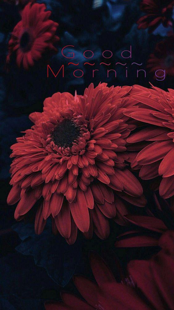 Καλημέρα λουλούδι