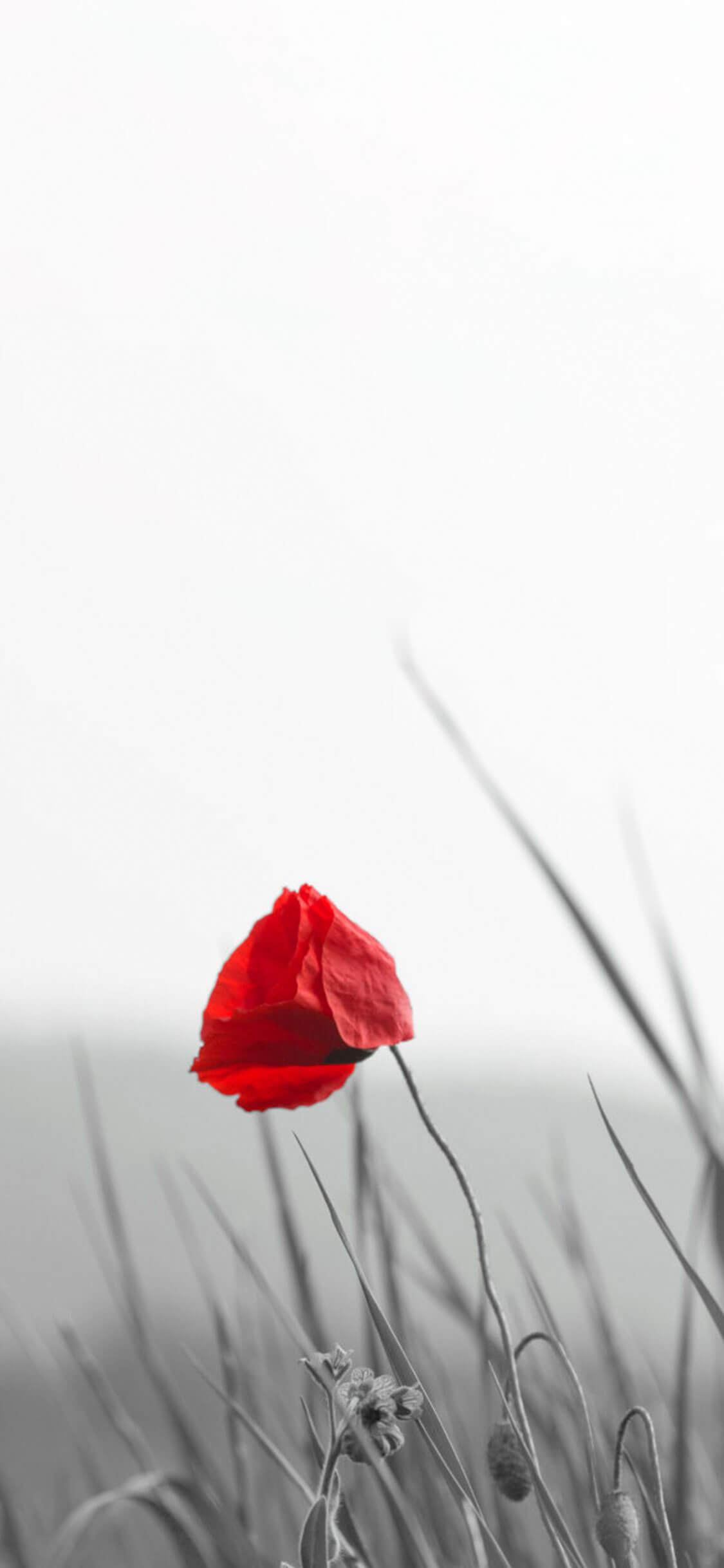 Fiore rosso .jpg