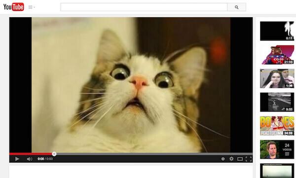 Video di gatti divertenti