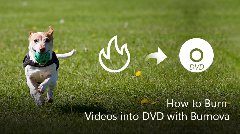 Best DVD Creator to Burn Video to DVD Disc/Folder/ISO File