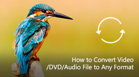 Convert Video/DVD/Audio File