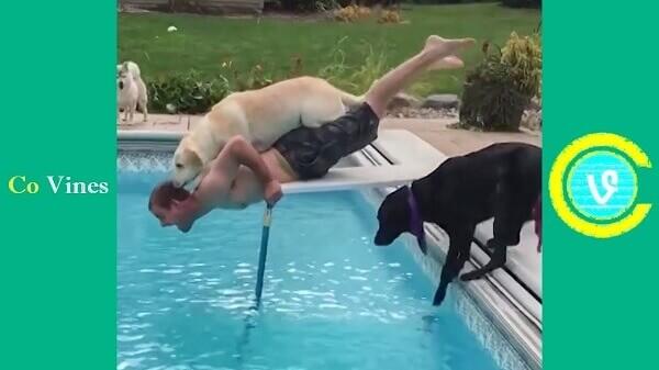 Το ζώο αποτυγχάνει